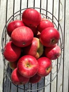 Dagens høst af æbler