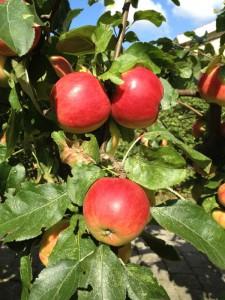 Solmodne æbler