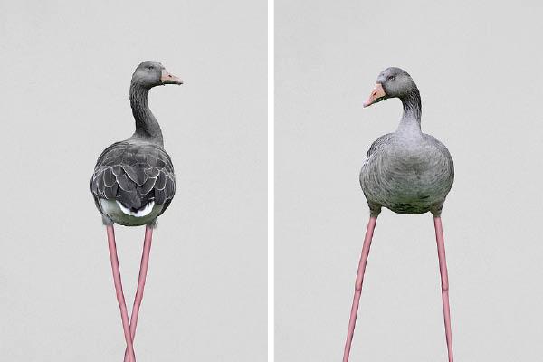 petmonkey-graybird-boligblog.com