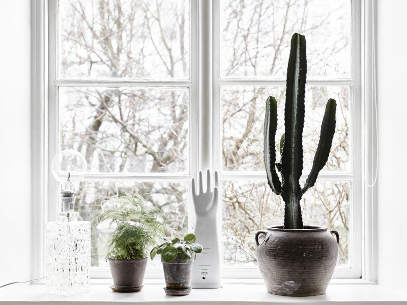 bolig-kaktus-boligblog.com