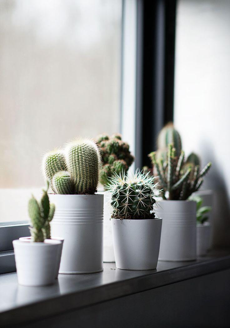 kaktus-centren.blogg.se