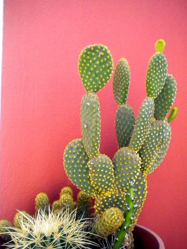 kaktus-landofcool.tumblr.com