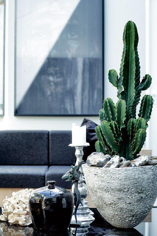 kaktus-onlybutaglimpse.tumblr.com